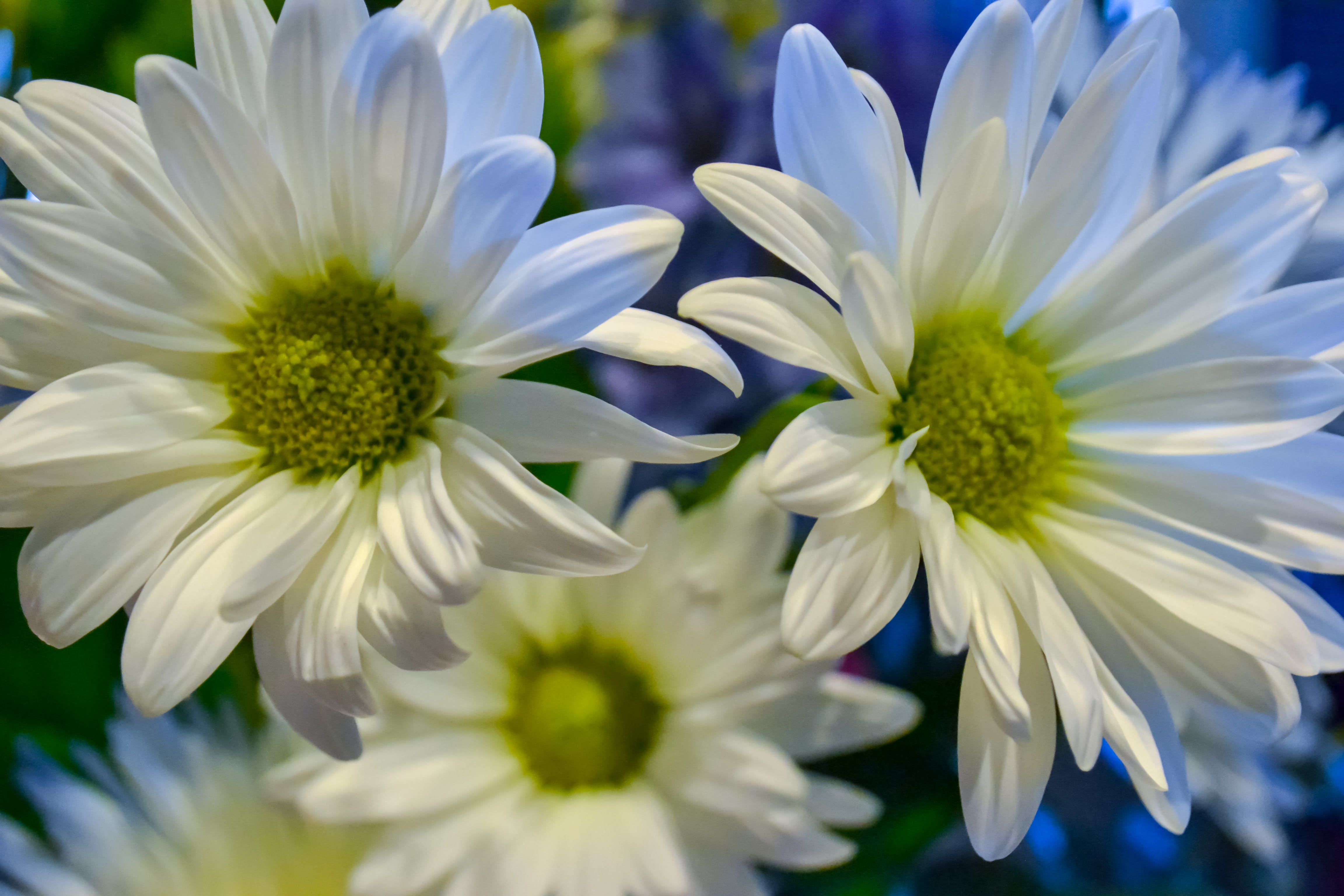 Shallow Focus Photography of White Petaled Flower
