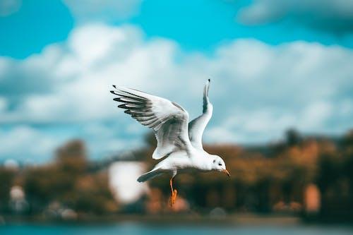 Imagine de stoc gratuită din pasăre pescăruș, seag