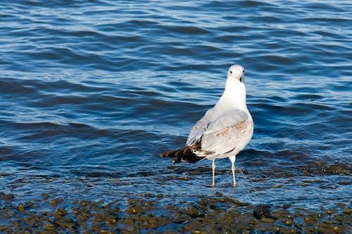 Бесплатное стоковое фото с белый, вода, голубой, животные