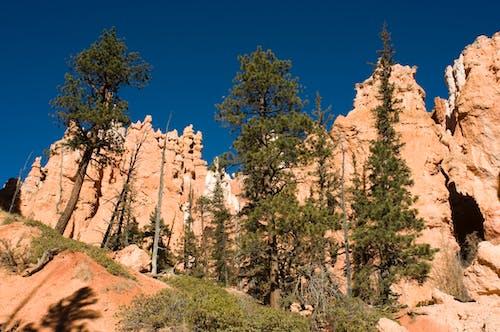 Бесплатное стоковое фото с брайс, голубой, деревья, заповедник