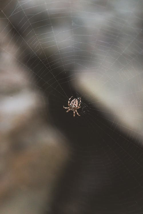 Close-Up Shot of a Spider on a Web