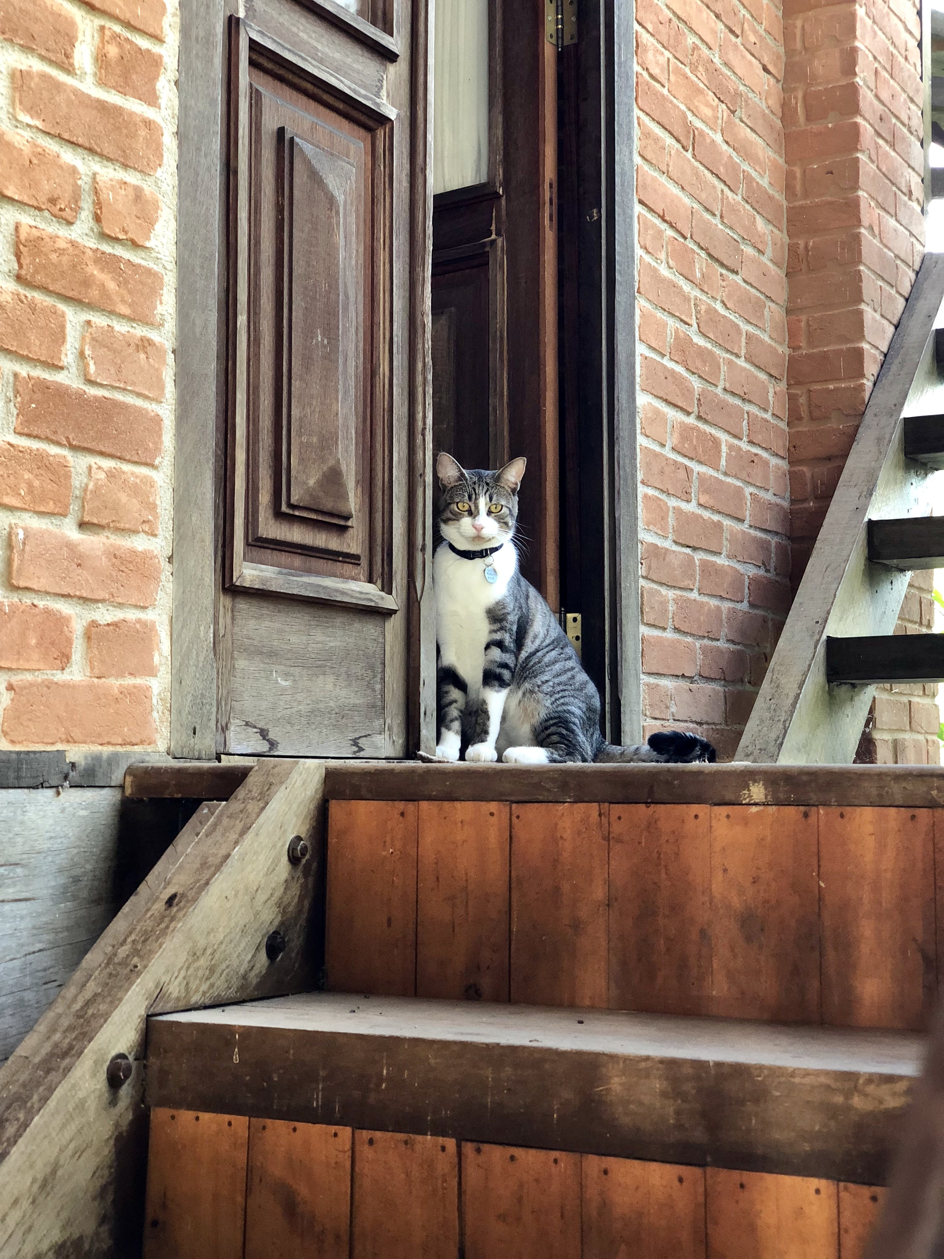White and Gray Tabby Cat Near Stairs