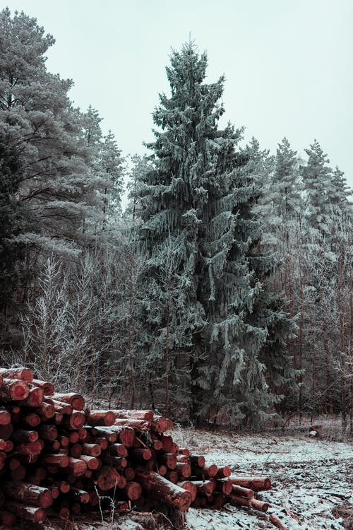 Árboles Verdes Cerca De La Pila De Leña