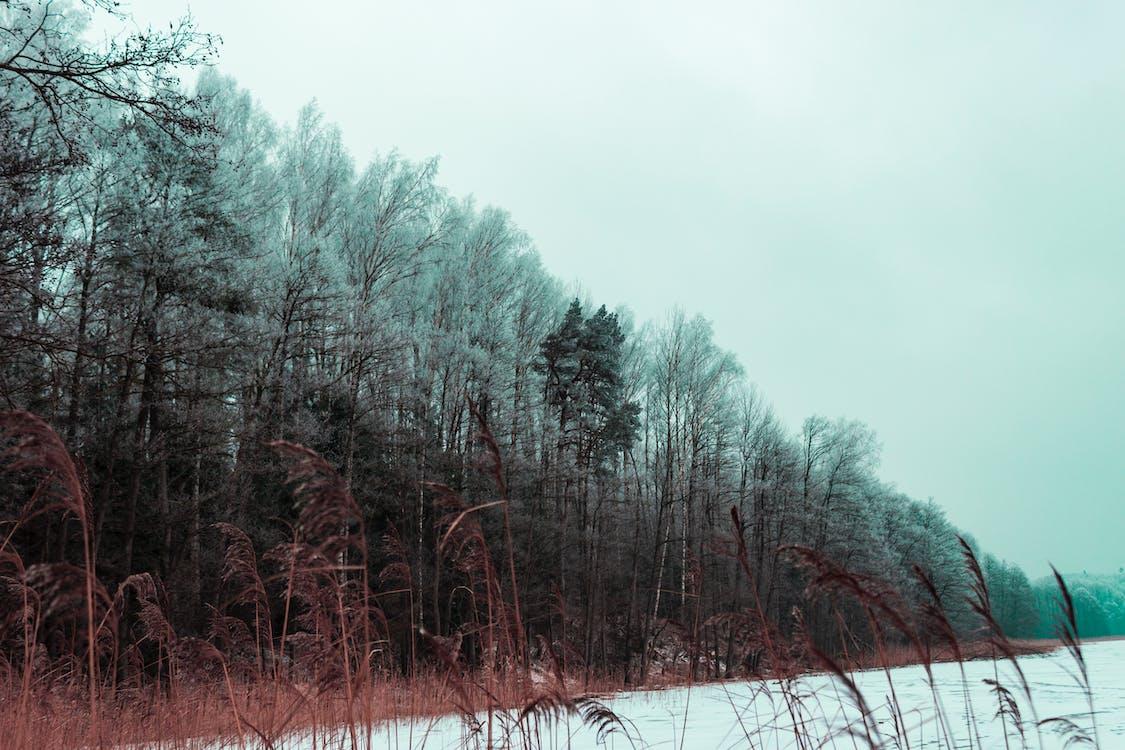 anotimp, arbore, arbori