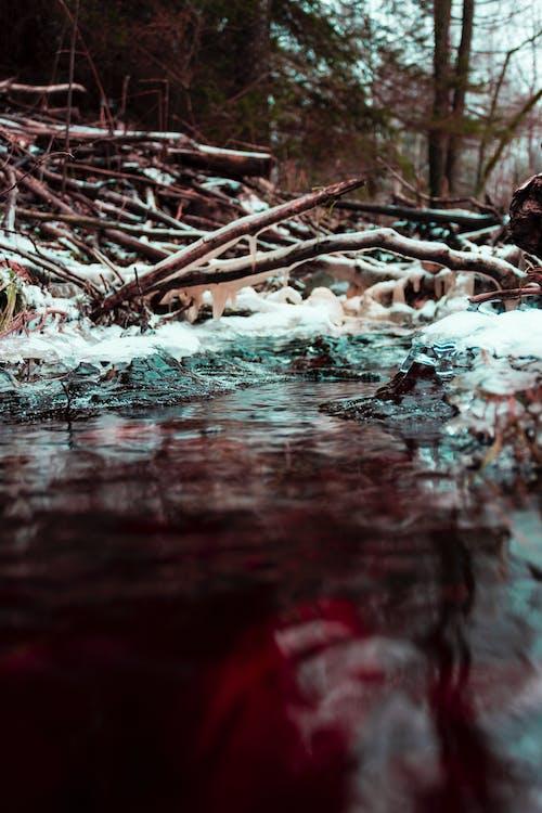 Fotografía En Primer Plano Del Cuerpo De Agua Junto A Las Ramas De Los árboles Durante El Día