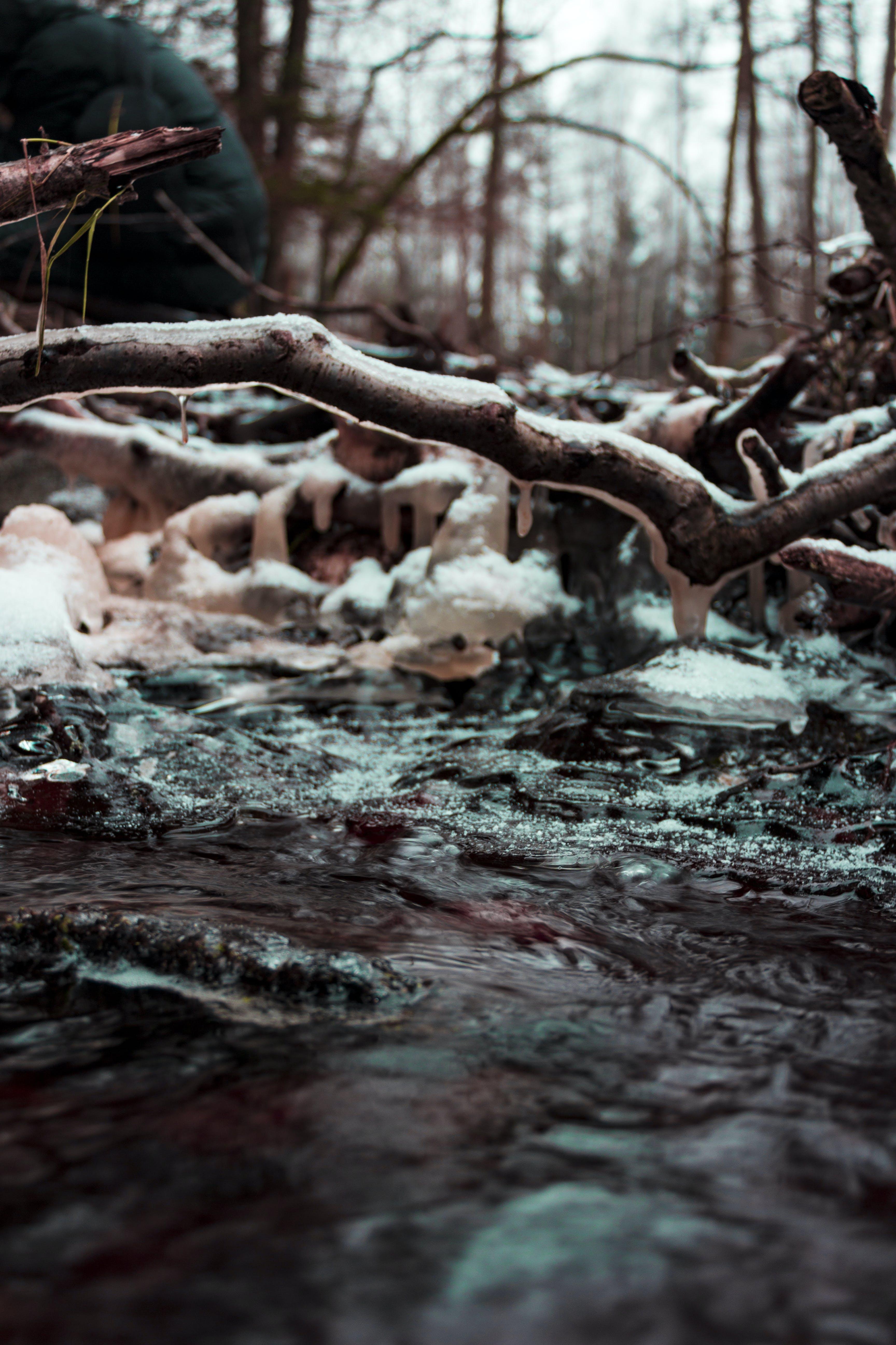 Foto d'estoc gratuïta de aigua, arbre, branca, branques