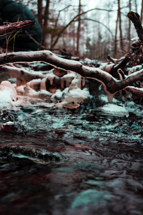 Brown Wood Branch Coated With Ice Near Water Photo