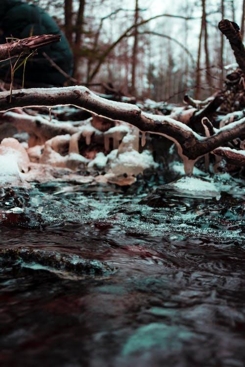 Fotobanka sbezplatnými fotkami na tému chladný, dážď, denné svetlo, farba