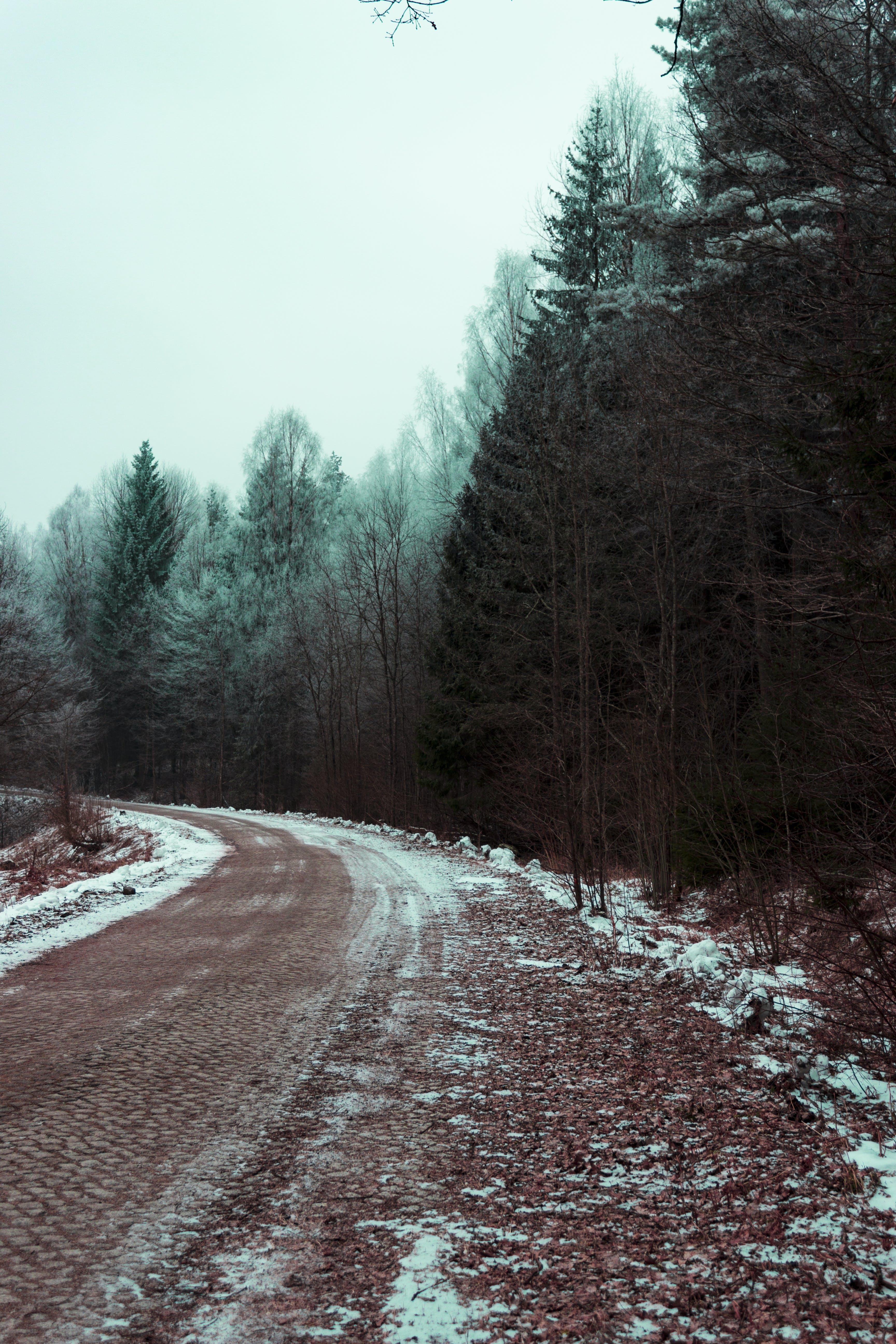 Δωρεάν στοκ φωτογραφιών με γραφικός, δέντρα, δέντρο, δρόμος