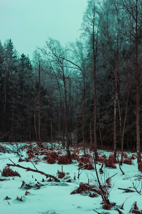Kostnadsfri bild av barrträd, dimma, frost, frostigt väder