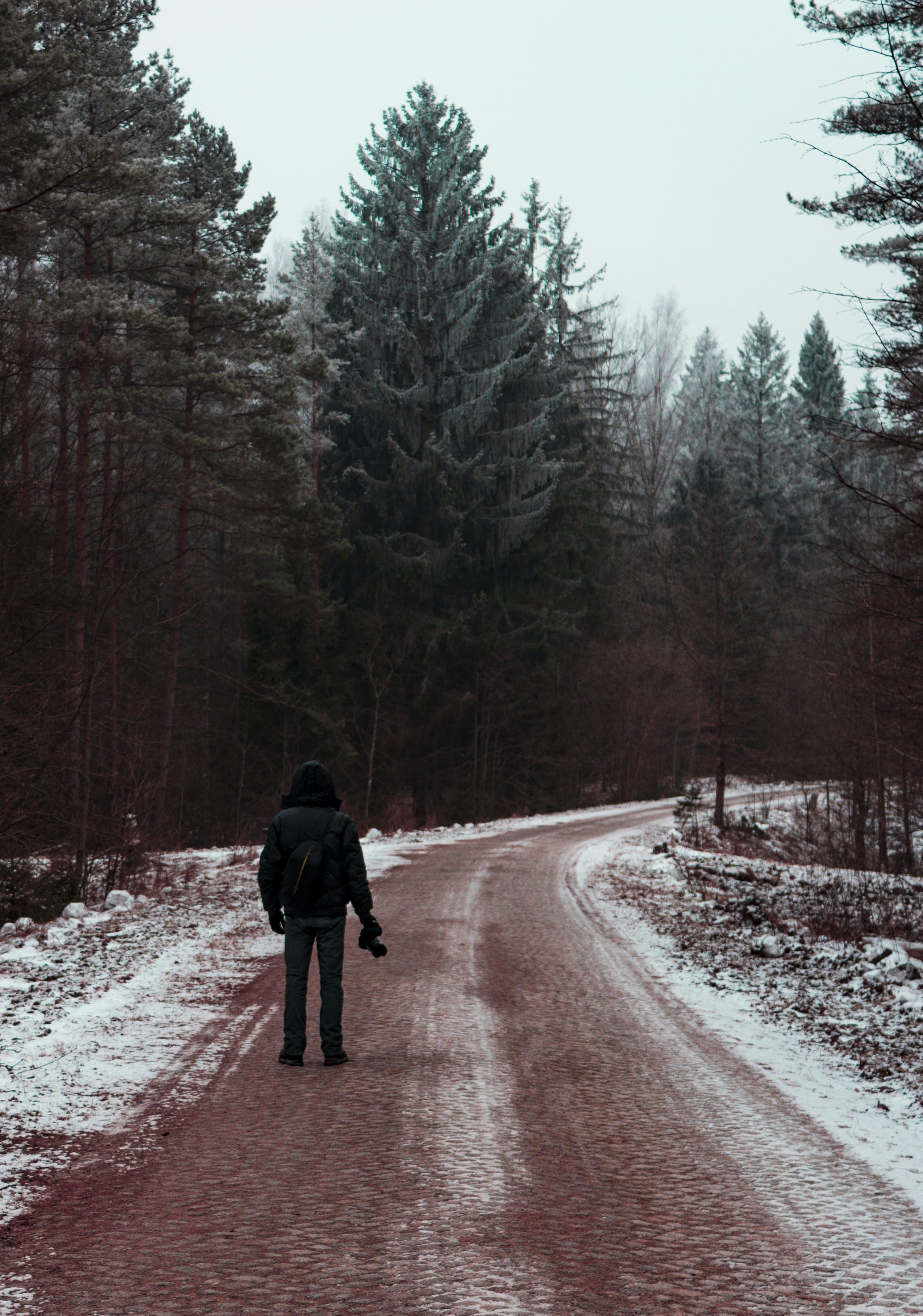 Fotos de stock gratuitas de arboles, carretera, congelado, escarcha
