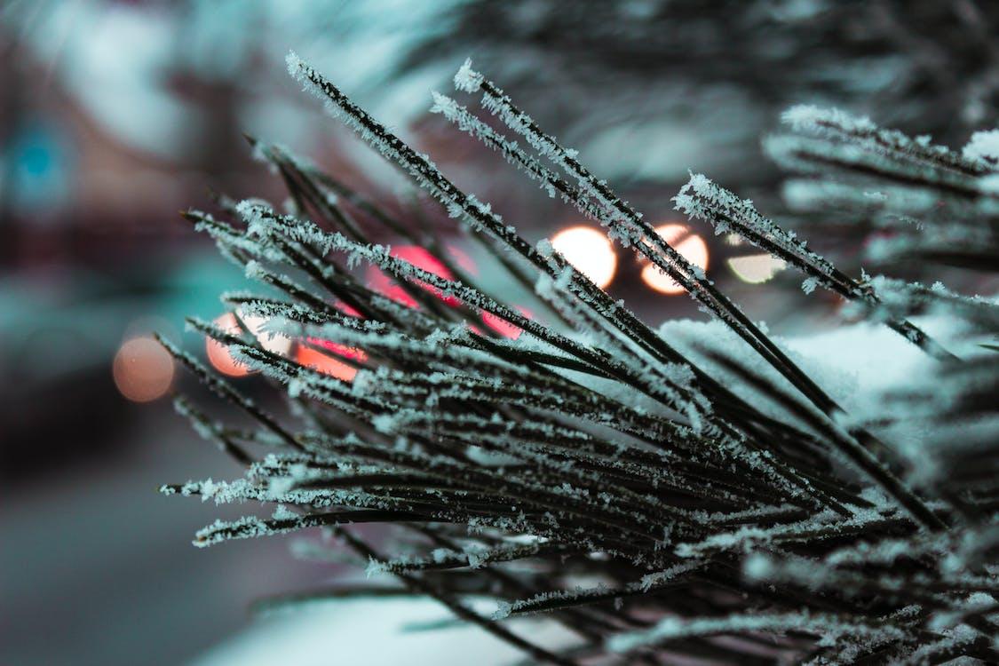 光, 光線, 冬季