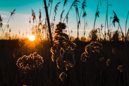 Základová fotografie zdarma na téma cereální, krajina, lehký, léto