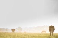 agriculture, farm, meadow