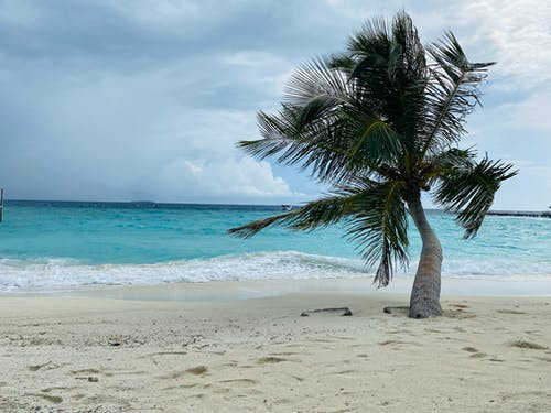 Palm Tree on Beach Shore