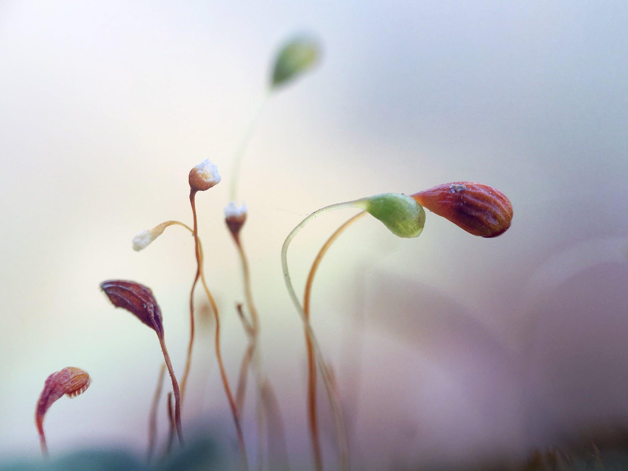 Kostenloses Stock Foto zu #macro #moss #natur # makrofotografie #details