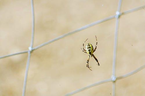 Fotobanka sbezplatnými fotkami na tému chrobák, pavúk, záhradný pavúk
