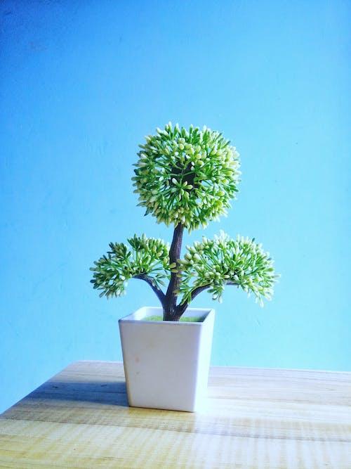Ingyenes stockfotó fa, fehér tob, irodai fa, kis fa témában
