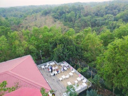 Ingyenes stockfotó fanézet, felső étterem, felső nézet, hegynézet témában
