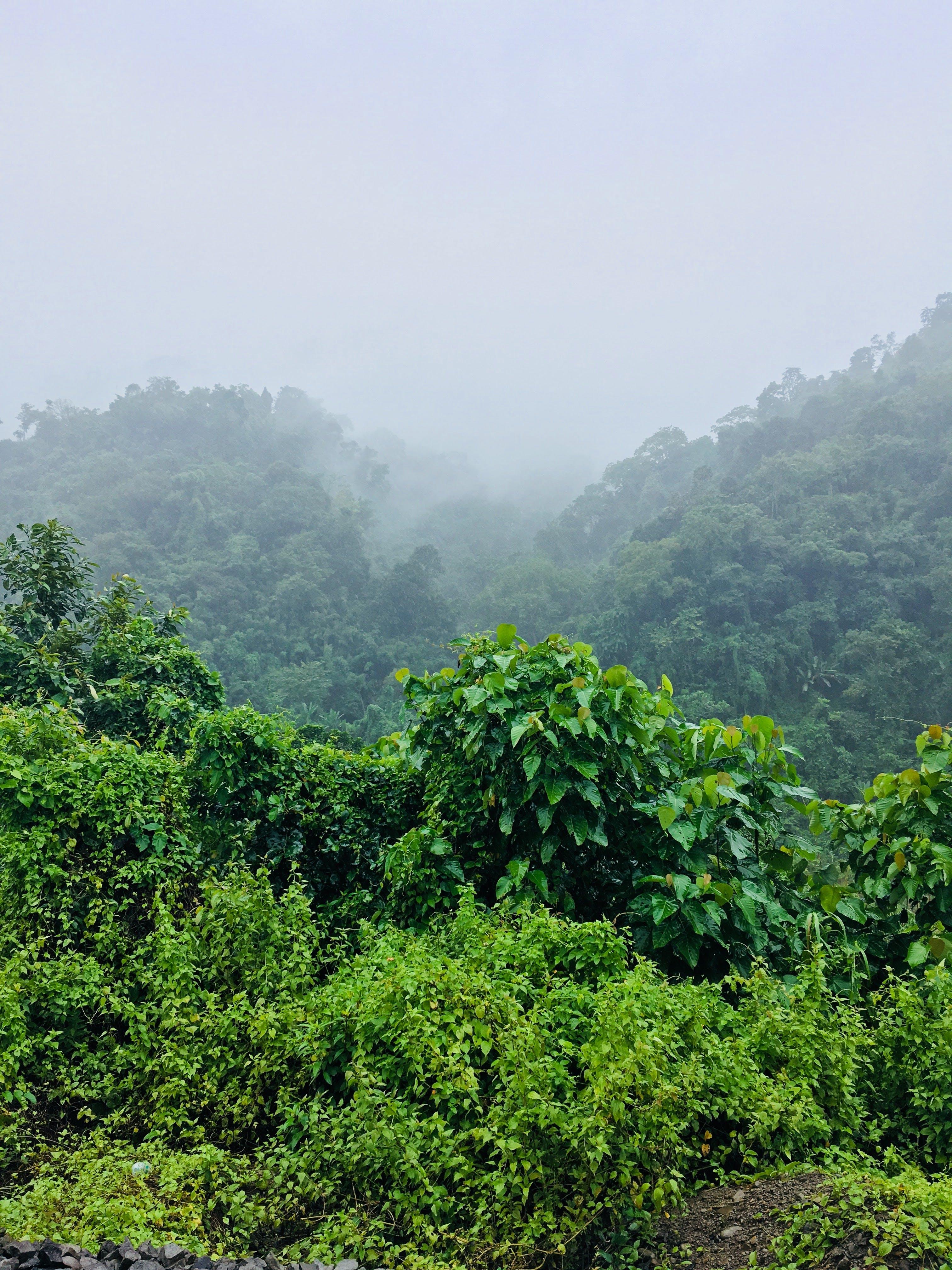 Green Leafed Plants Under Foggy Morning