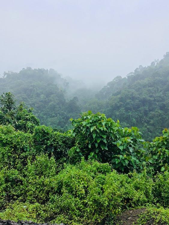 シーン, ジャングル, トロピカル