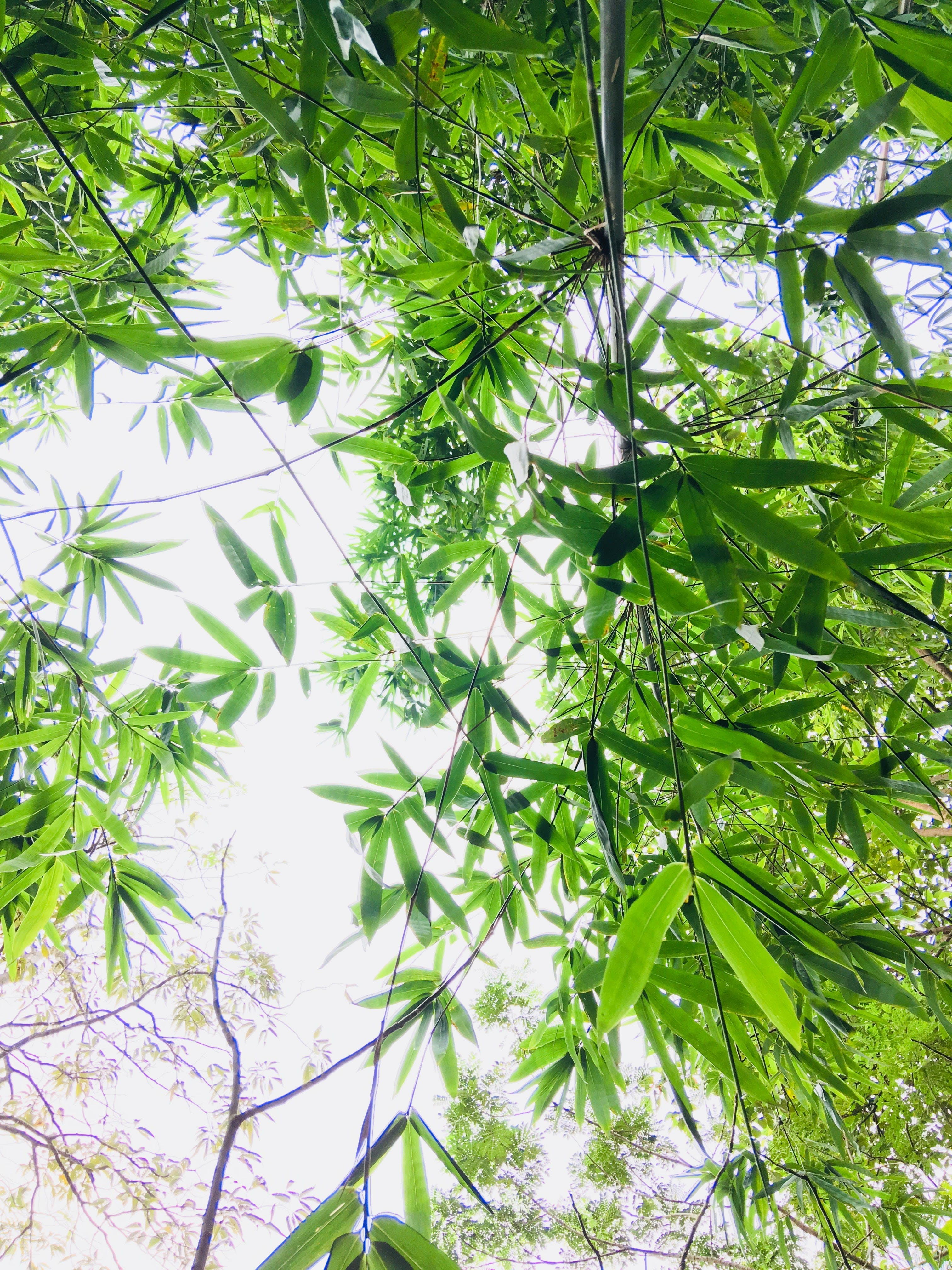 Low-angle Photography of Green Leaf Tree