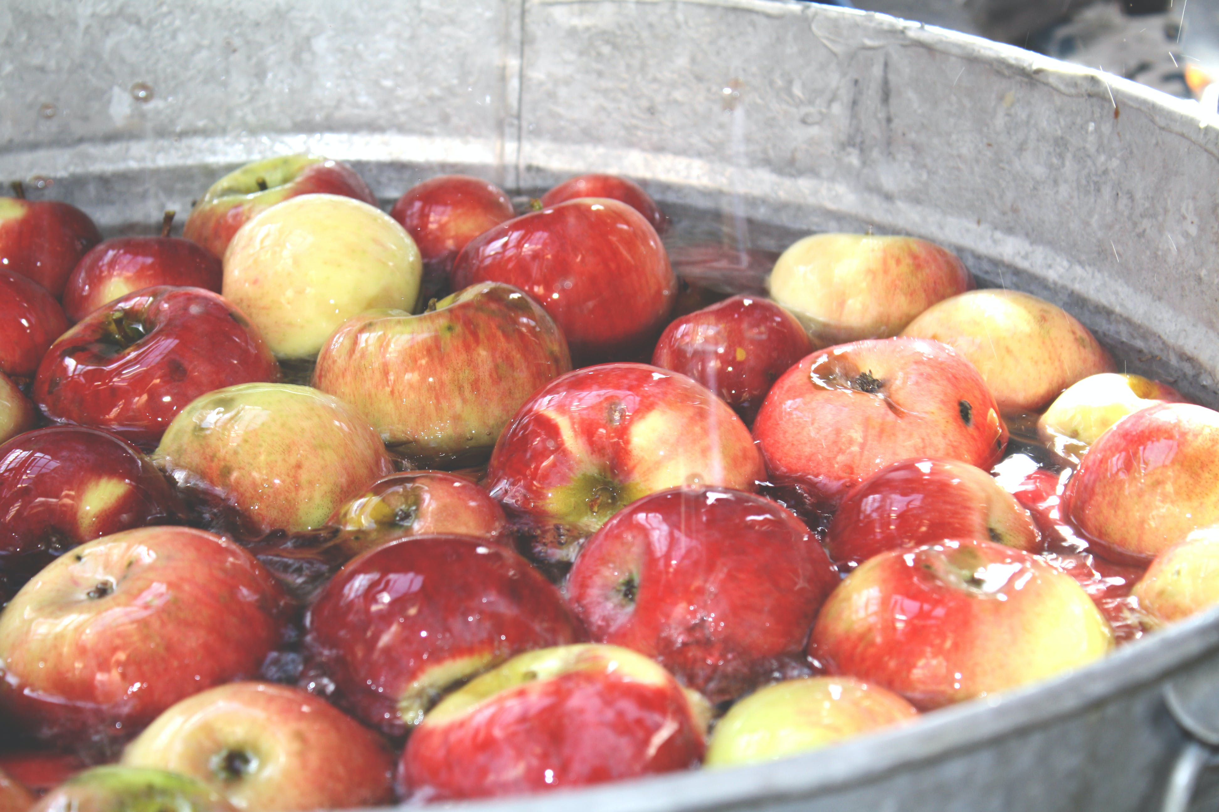 Free stock photo of apples, fall, farm, orchard