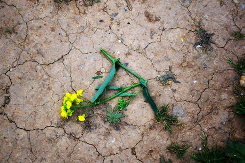 Immagine gratuita di fiore, fiori primaverili, giallo, secco