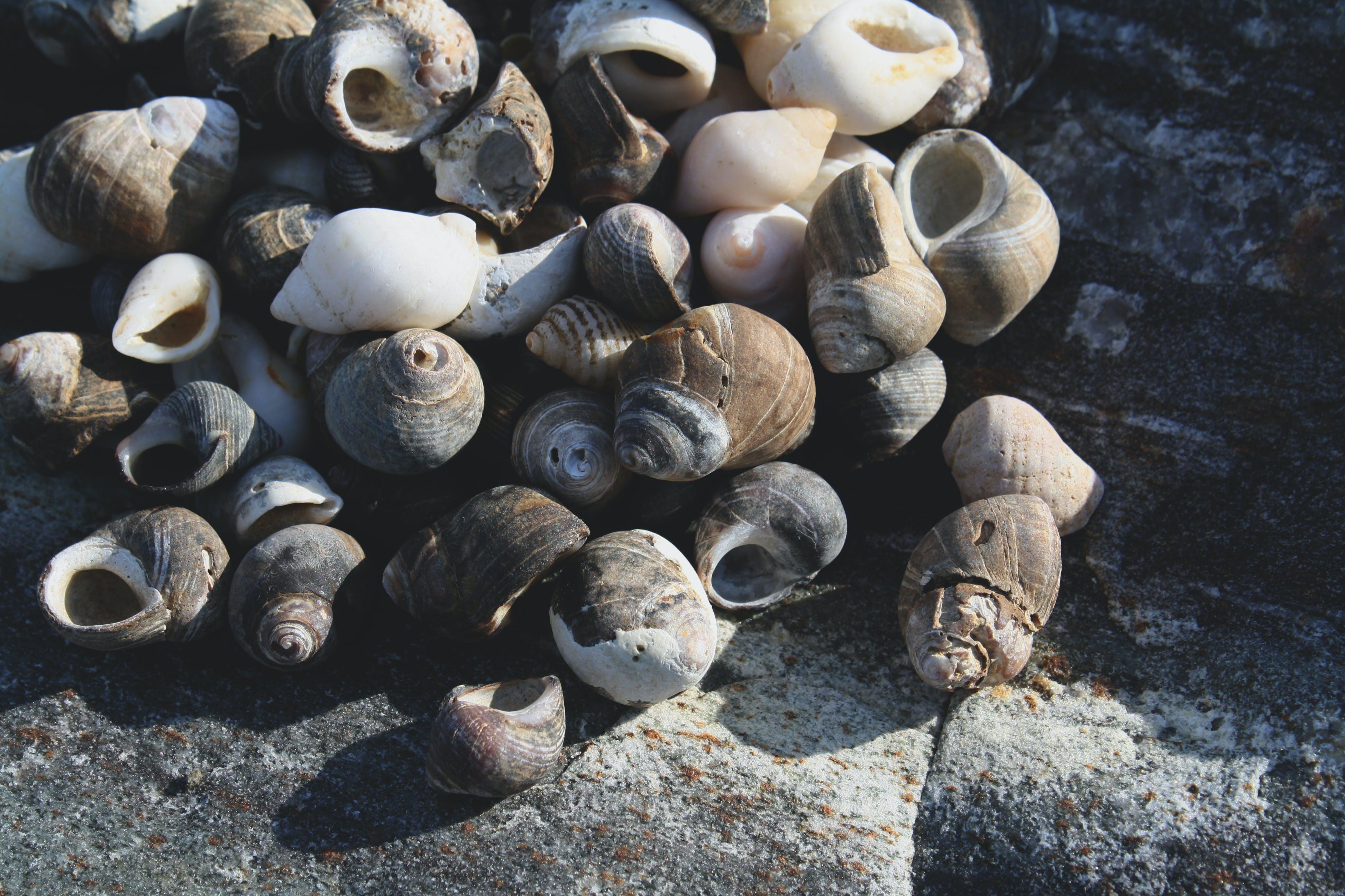 ocean, rock, sea shells