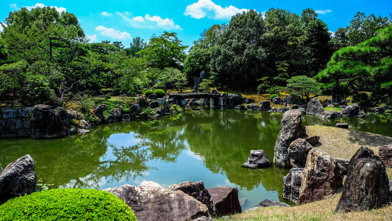 250 great pond photos pexels free stock photos