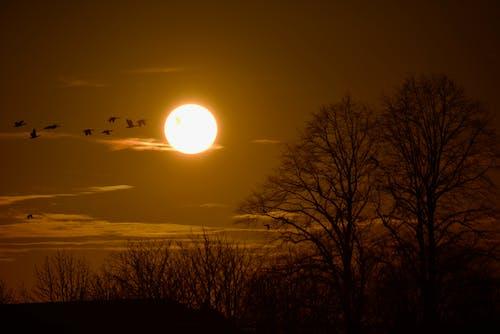 Ilmainen kuvapankkikuva tunnisteilla auringonlasku, aurinko, ilta, lintuparvi