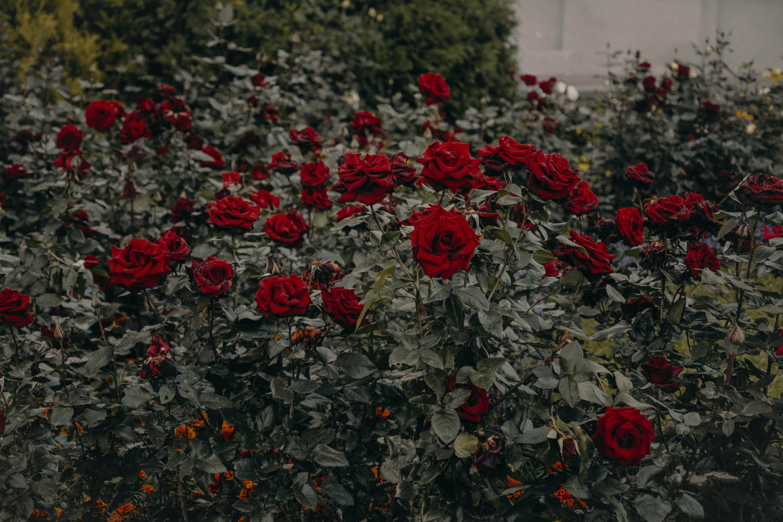 Gratis lagerfoto af bane, blomst, blomstrende, farve