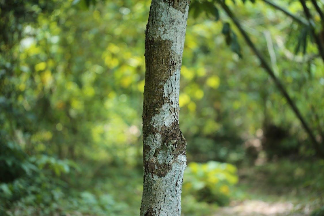 arbori, buștean, copaci