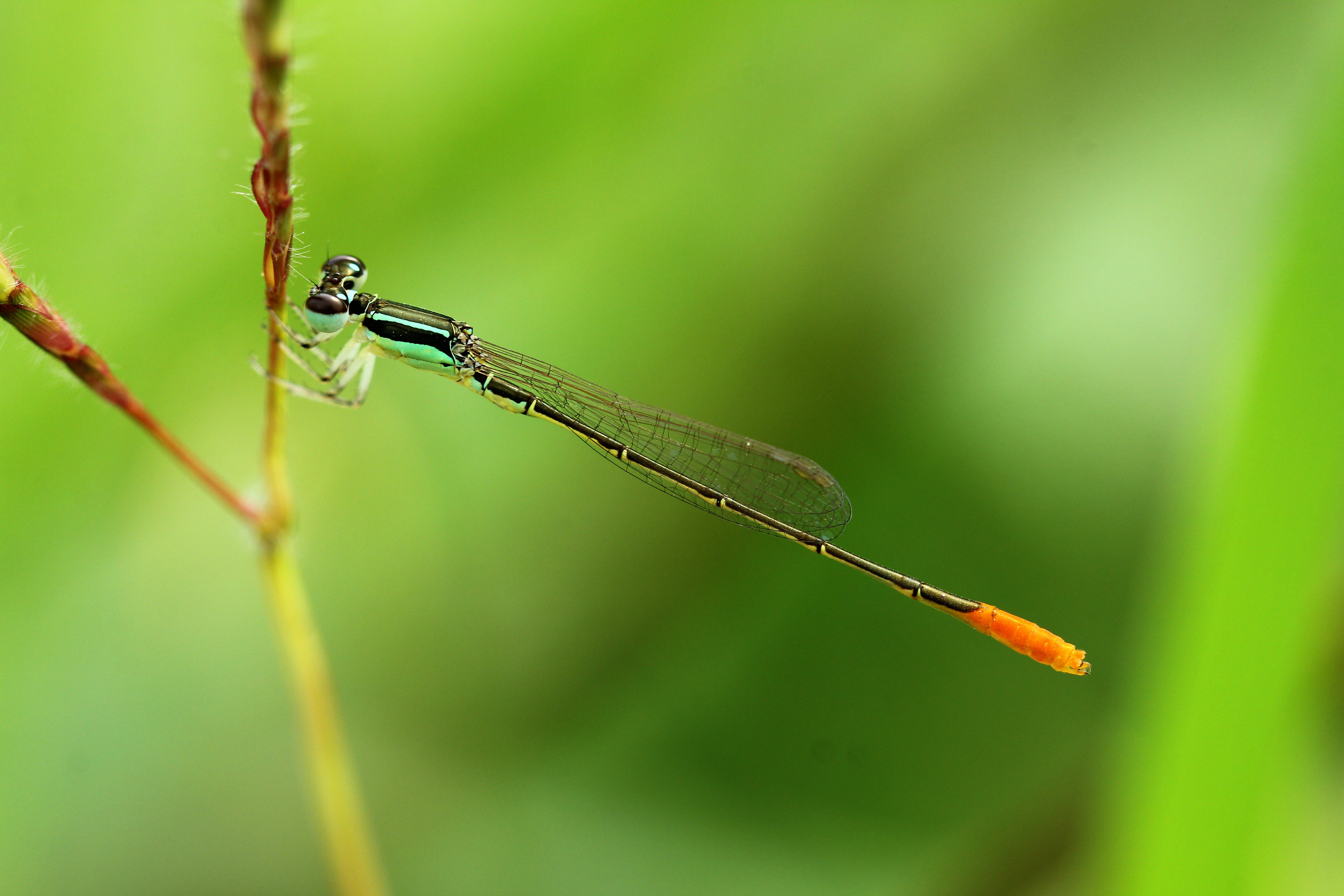 Green Damselfly Perched on Plant Stem at Daytime