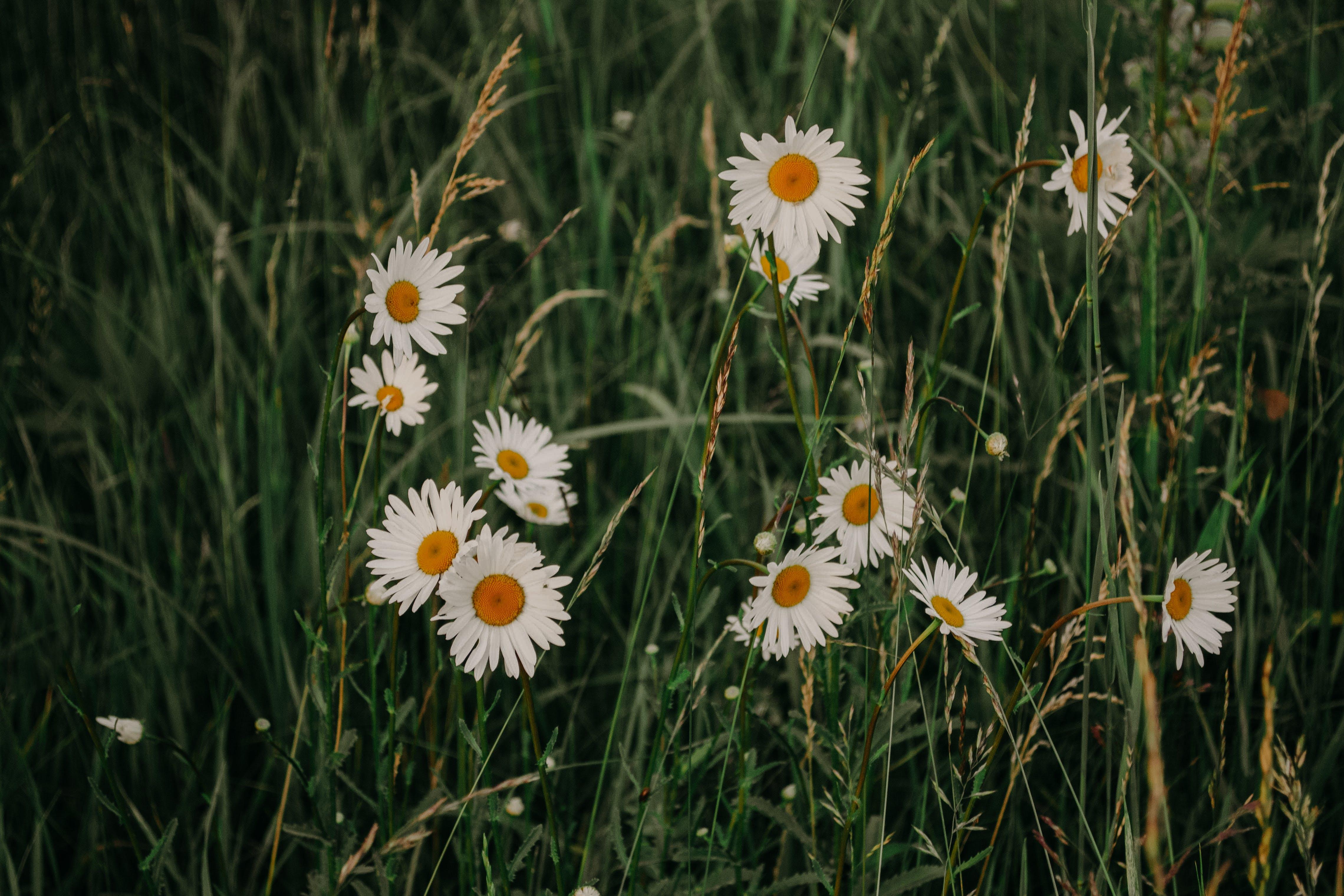 계절, 꽃, 꽃이 피는, 대자연의 무료 스톡 사진