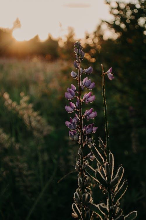 Základová fotografie zdarma na téma divoký, flóra, hřiště, jasný