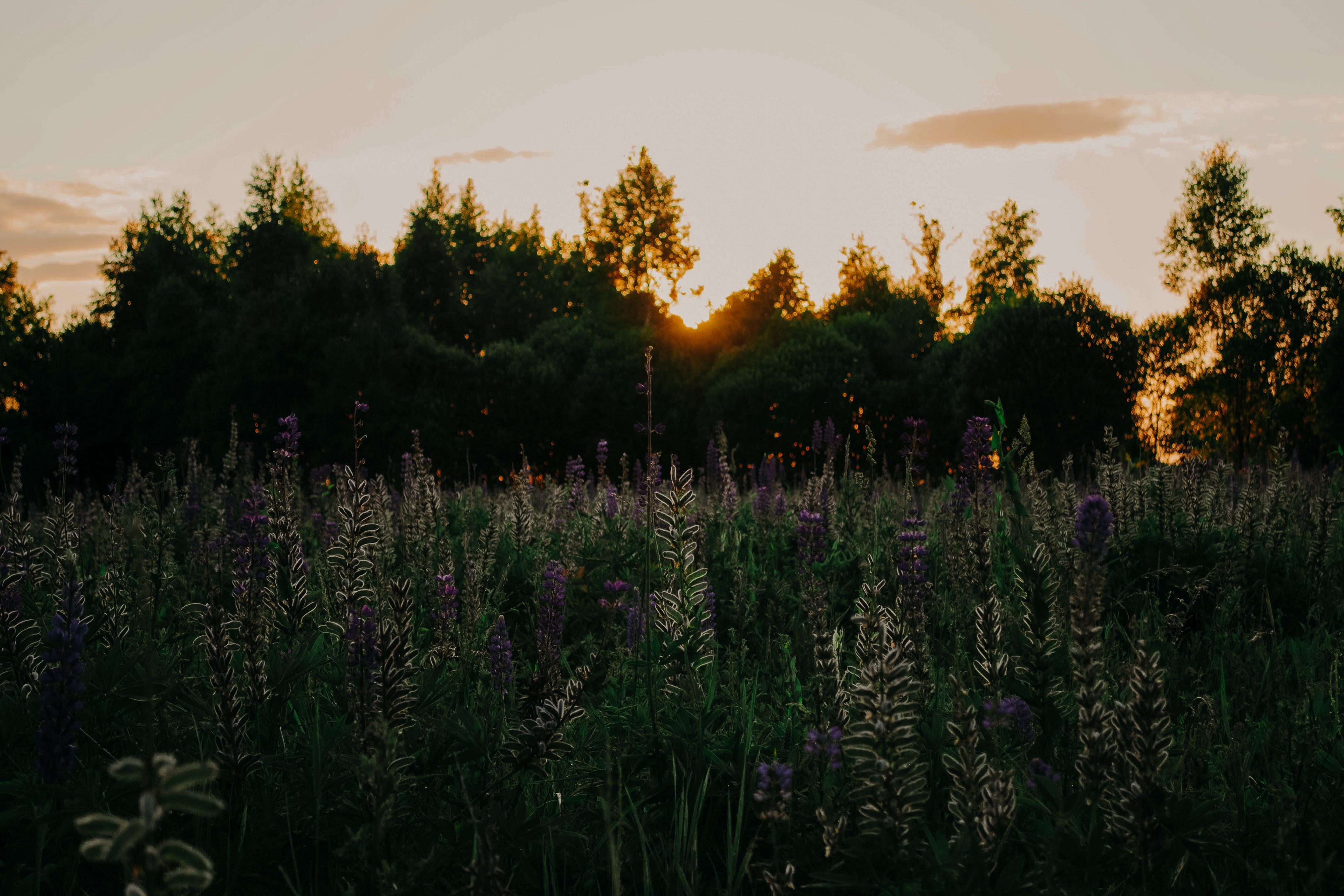 Foto d'estoc gratuïta de alba, arbres, bonic, camp