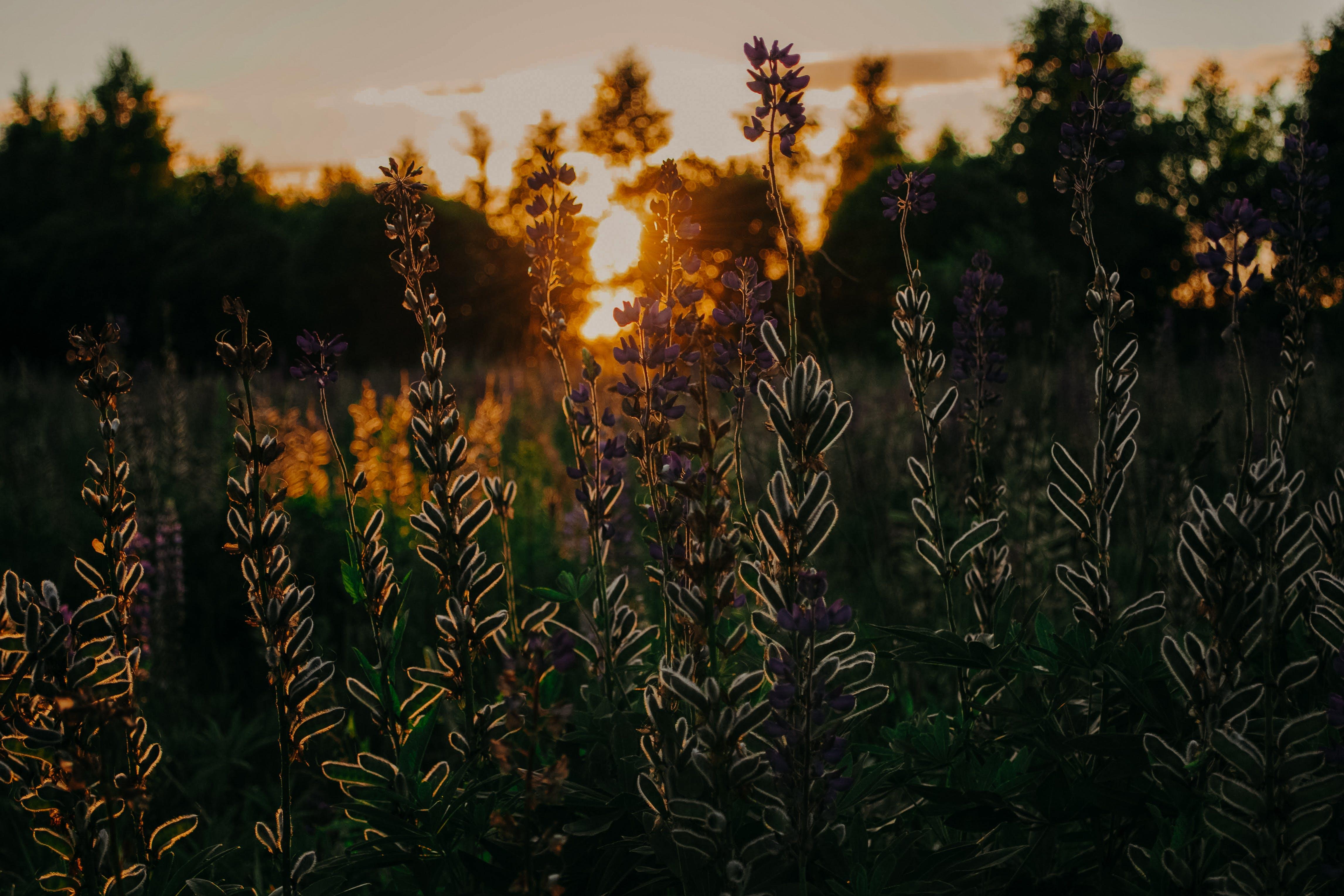 경치, 꽃, 들판, 식물의 무료 스톡 사진