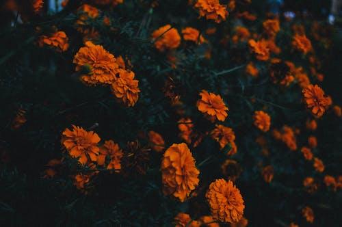 Základová fotografie zdarma na téma klasika, krásné květiny, květiny, kytice