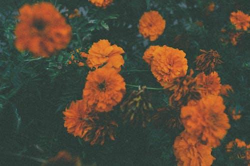 Darmowe zdjęcie z galerii z bukiet kwiatów, klasyczny, kwiaty, piękne kwiaty