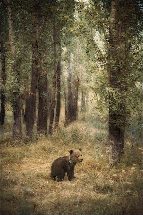 Photos gratuites de forêt, œuvre, pictural