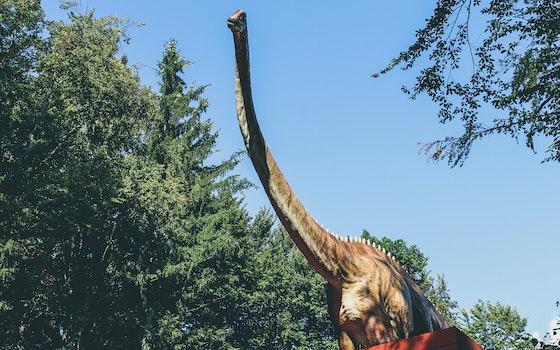 Free stock photo of dinosaur