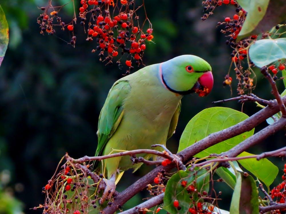 Green and Red Beak Bird on Grey Branch