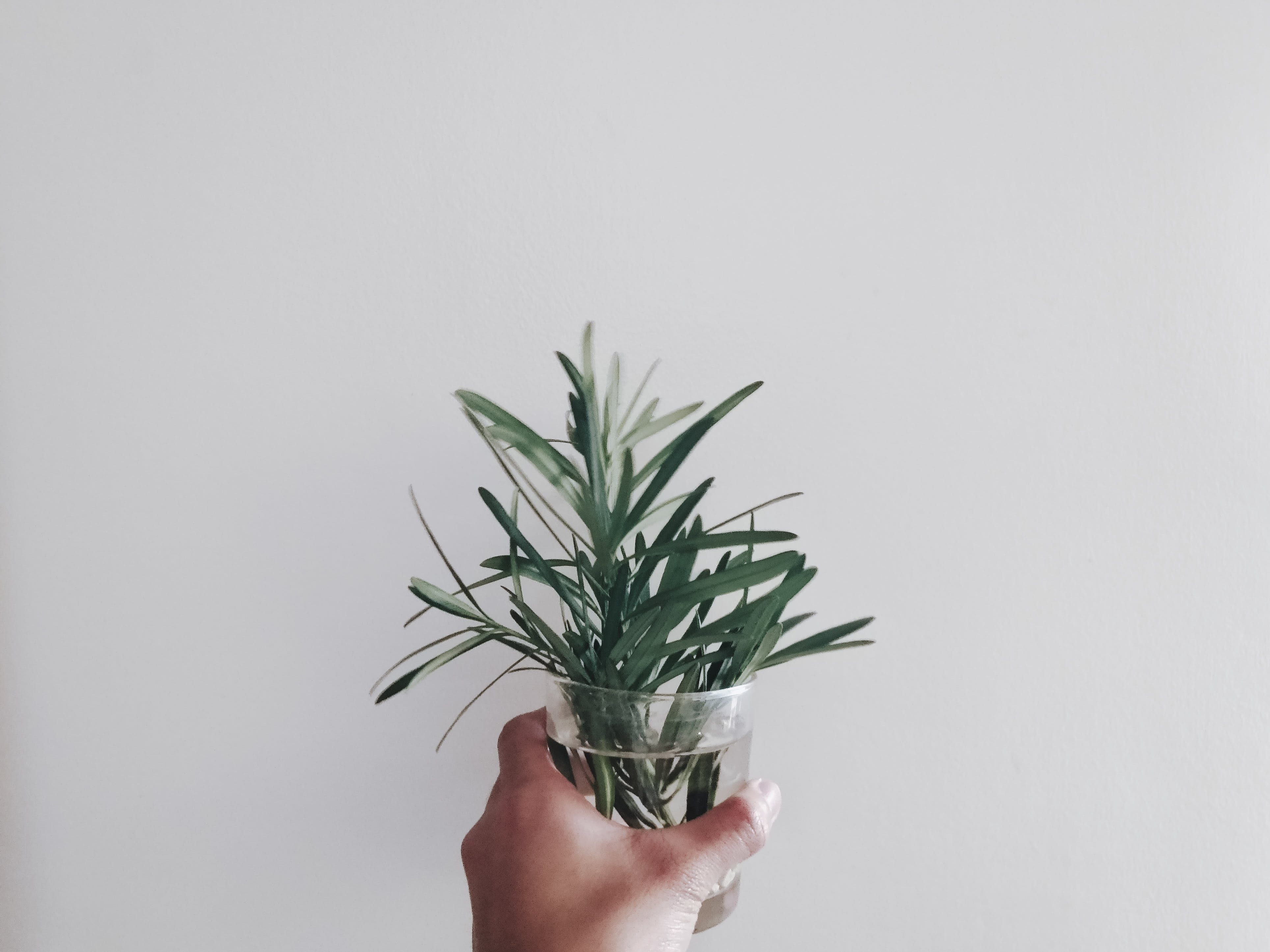 Person Holding Green Leaf Plant