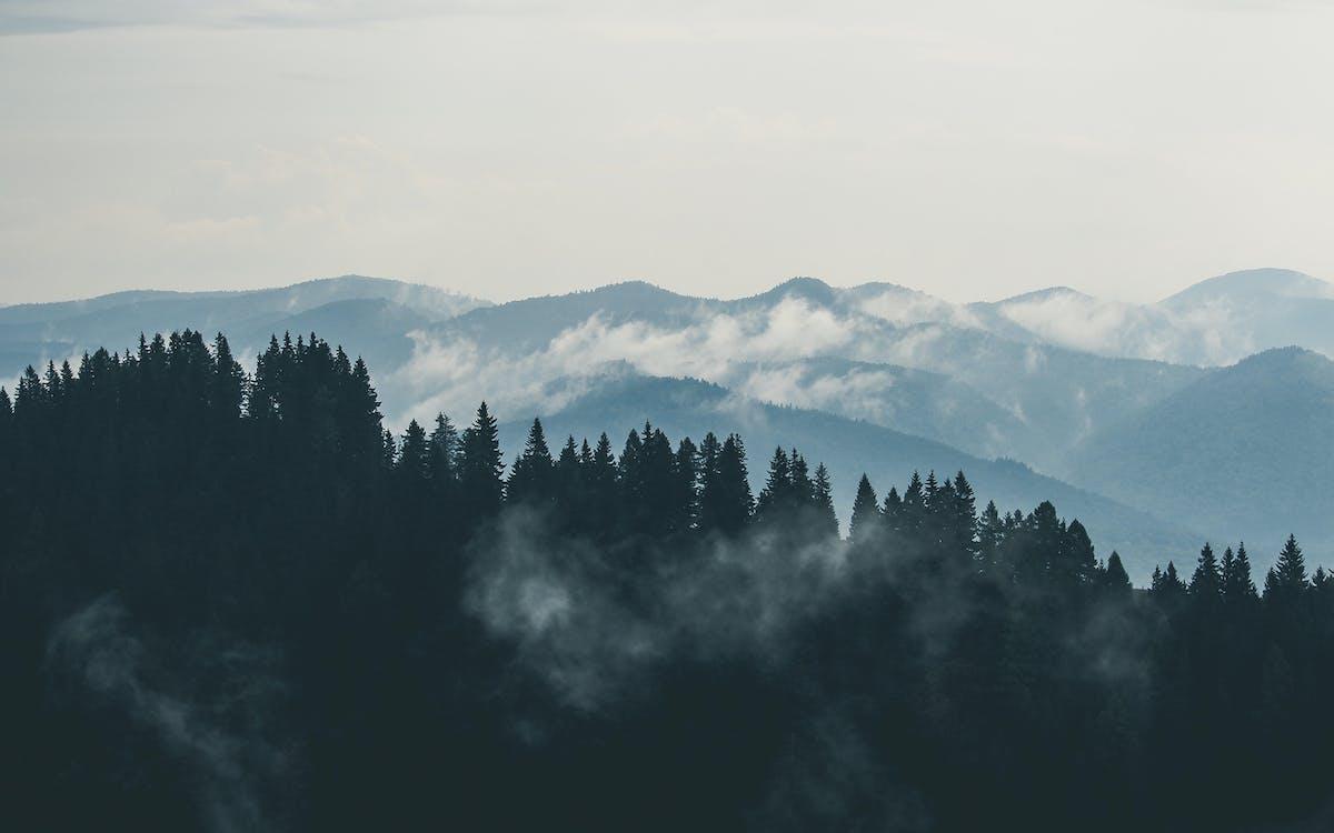 chmury, góry, las