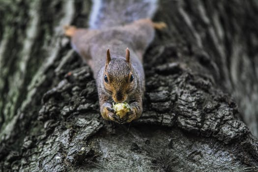 Free stock photo of nature, eating, animal, cute