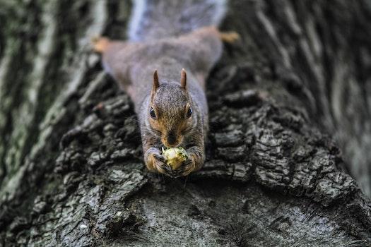 Free stock photo of nature, animal, squirrel, animal photography