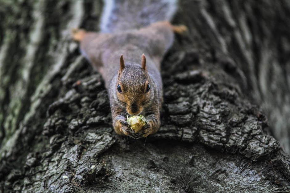 animal, animal photography, nature