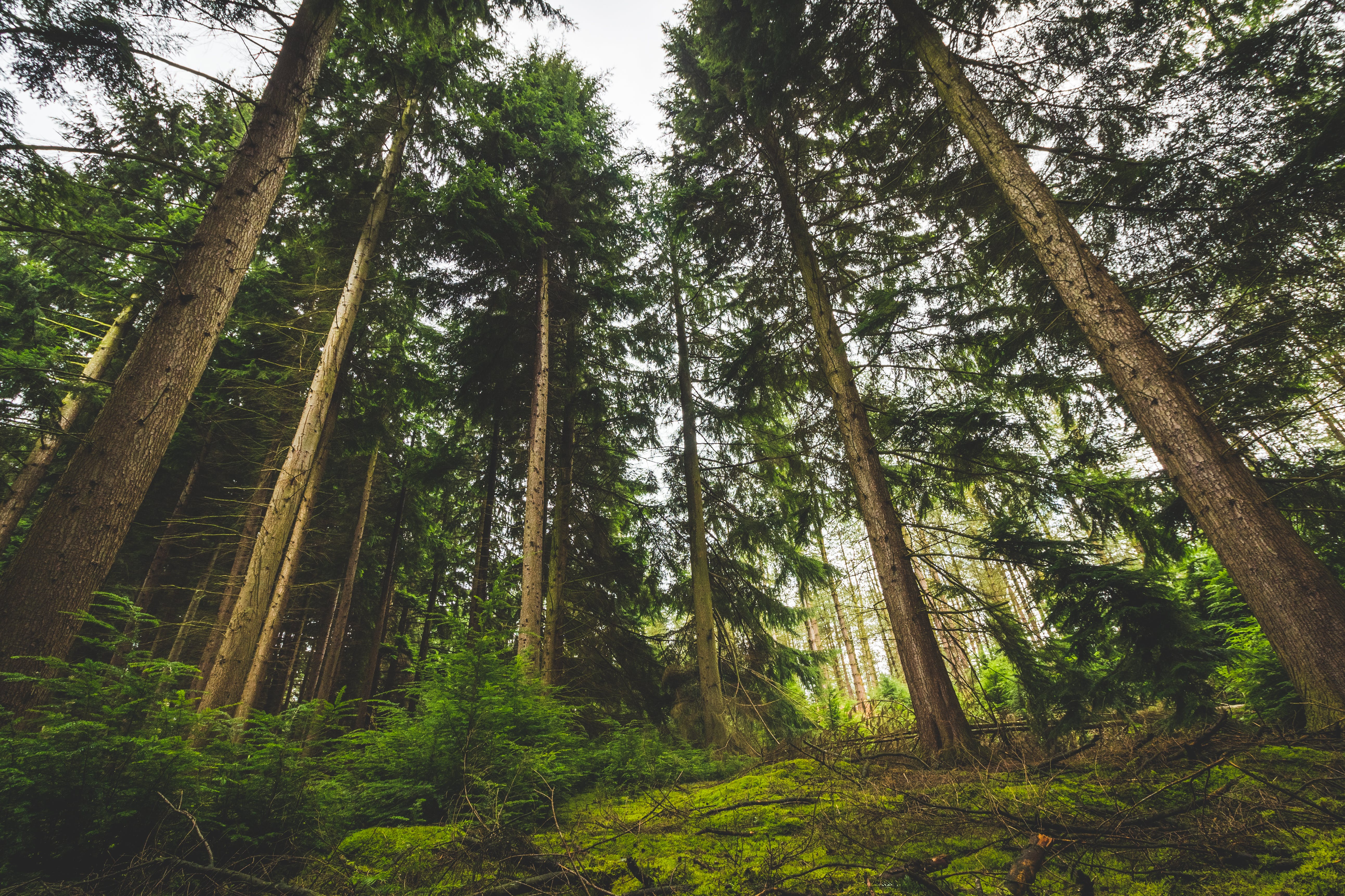 Low Angle View of Trees on Forest
