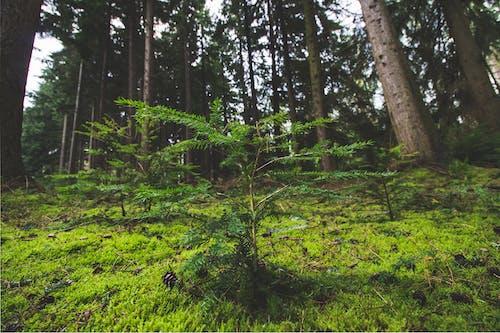 #树, #树木, #森林 的 免费素材照片